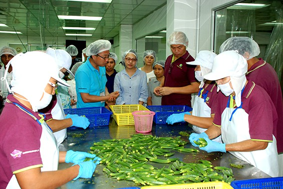 Observing okra sorting at Chanchawan Company.