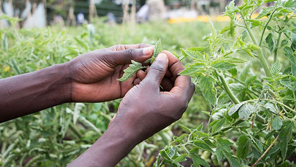 Major initiative to transform agriculture in Africa