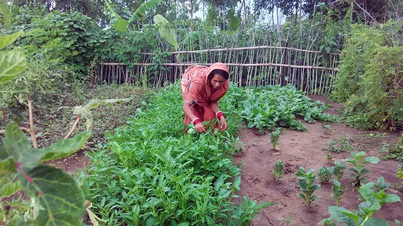Impact and cost-effectiveness of women's training in home gardening and nutrition in Bangladesh